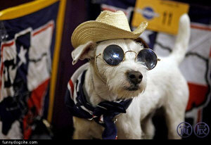 This dog digs outlaw country (from Puprwear.com)